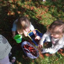 Activities Week 2 – Conkers & Stick Insects